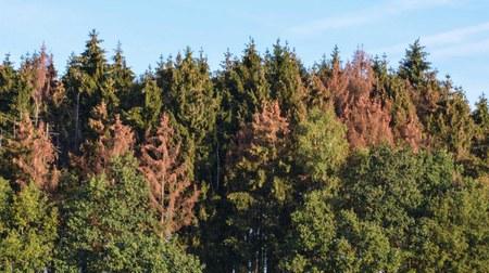 Crise des scolytes : information aux propriétaires privés de parcelles boisées