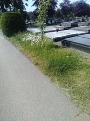 Le cimetière d'Arlon entretenu sous l'angle de la biodiversité pour le monde vivant…