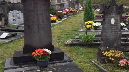 Végétalisation du cimetière